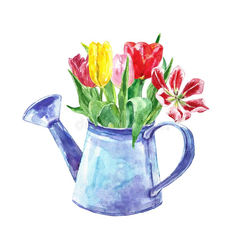 Watercolor spring floral bouquet in a vintage pot. Set of hand painted tulip flowers in a rustic watering can, isolated vector illustration