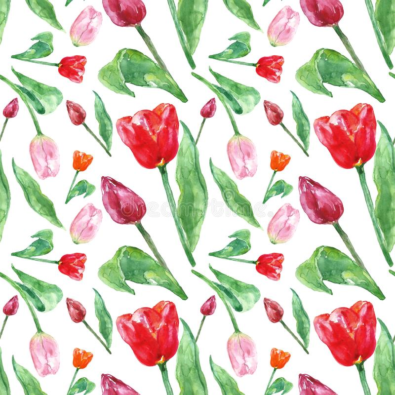 Watercolor spring floral pattern with tulips flowers, isolated on white background. Colorful seamless botanical pattern stock photo