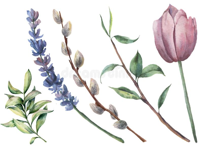 Watercolor spring floral set. Hand painted tulip, tree branch with leaves, lavender flower, willow and greenery isolated. On white background. Botanical stock illustration