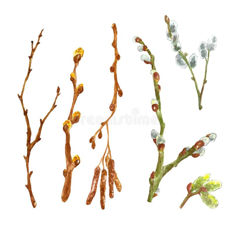 Watercolor spring set od tree branches, sticks, twigs with leaf buds. Open up pussy willow tree, isolated on white background. stock illustration