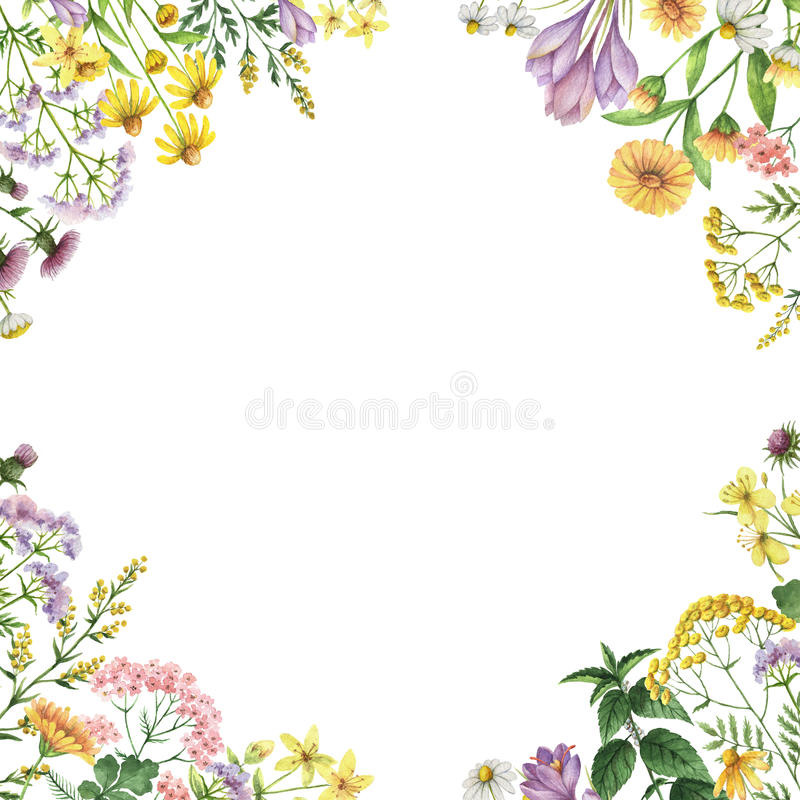 Watercolor square frame with medical plants. royalty free stock photography