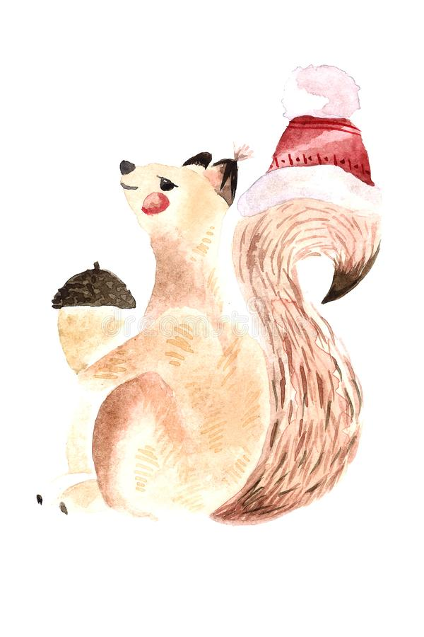 Watercolor squirrel with nut. Watercolor Christmas squirrel with nut on white background stock images
