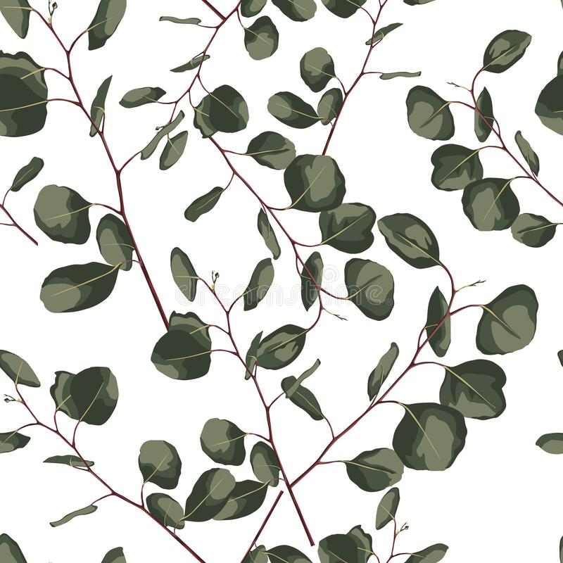 Seamlessr pattern with eucalyptus. Hand painted floral ornament with silver dollar, seeded and baby eucalyptus royalty free illustration