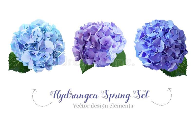 Watercolor style hydrangea flowers set stock illustration