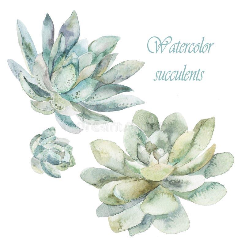 Watercolor succulent Τέχνη Watercolor ελεύθερη απεικόνιση δικαιώματος