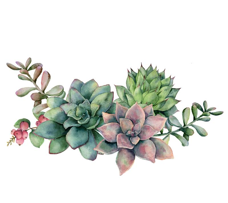Watercolor succulent bouquet with berries. Hand painted green and violet flowers, branch and red berries isolated on. White background. Floral illustration for vector illustration