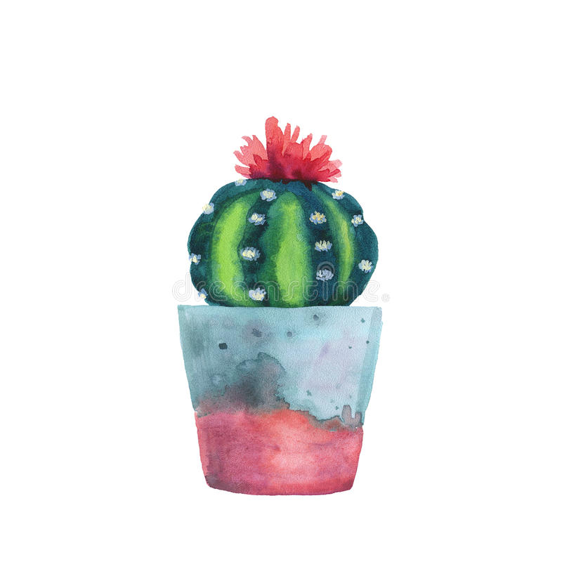 Watercolor succulent in a flowerpot. Isolated on a white background. Handdrawn green succulent in pot. Blossom watercolour cactus. Blooming cactus. Flower royalty free illustration