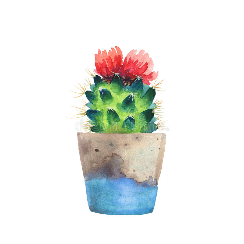 Watercolor succulent in a flowerpot. on a white backgro. Watercolor succulent in a flowerpot. Isolated on a white background. Handdrawn green succulent in pot vector illustration
