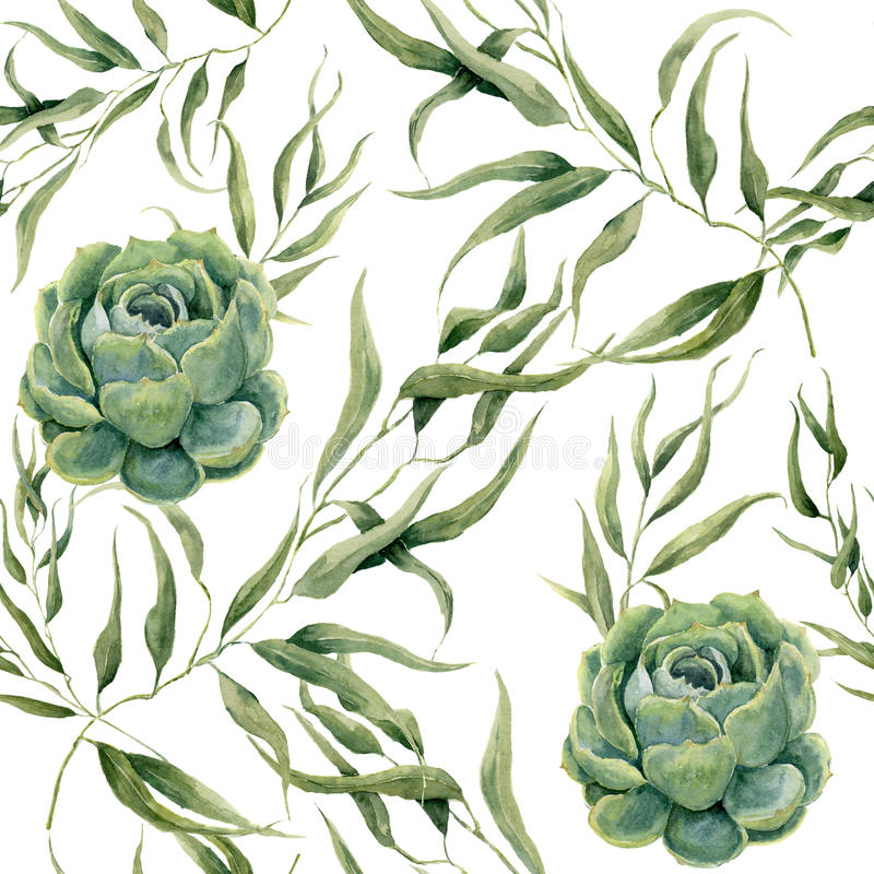 Watercolor succulents και άνευ ραφής σχέδιο φύλλων ευκαλύπτων στο άσπρο υπόβαθρο Floral σύσταση για το σχέδιο, κλωστοϋφαντουργικό ελεύθερη απεικόνιση δικαιώματος