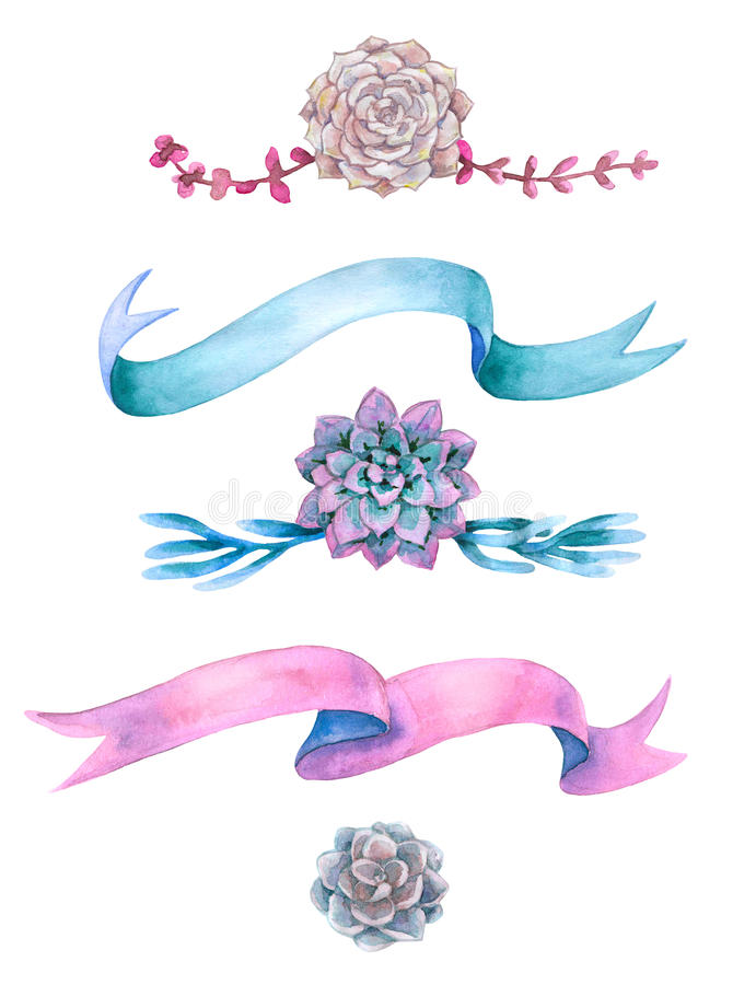 Watercolor succulents and ribbons. royalty free illustration