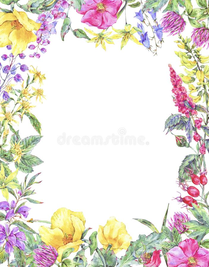 Watercolor summer medicinal floral vertical frame, Wildflowers plant stock illustration