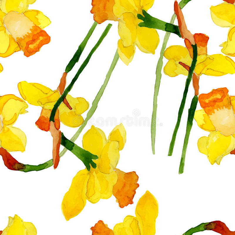 Watercolor summer narcissus flower stock illustration