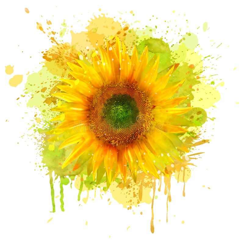 Watercolor sunflower. Vector royalty free illustration