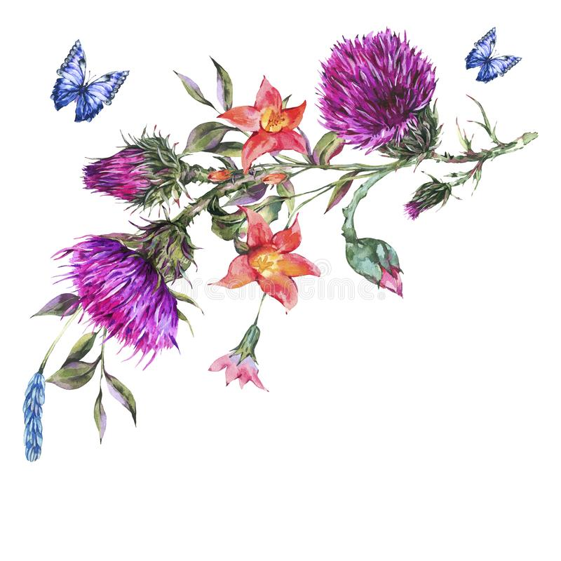 Watercolor thistle, poppy, blue butterflies, wild flowers illustration, meadow herbs royalty free illustration
