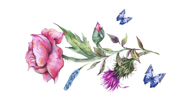 Watercolor thistle, poppy, blue butterflies, wild flowers illustration, meadow herbs stock illustration
