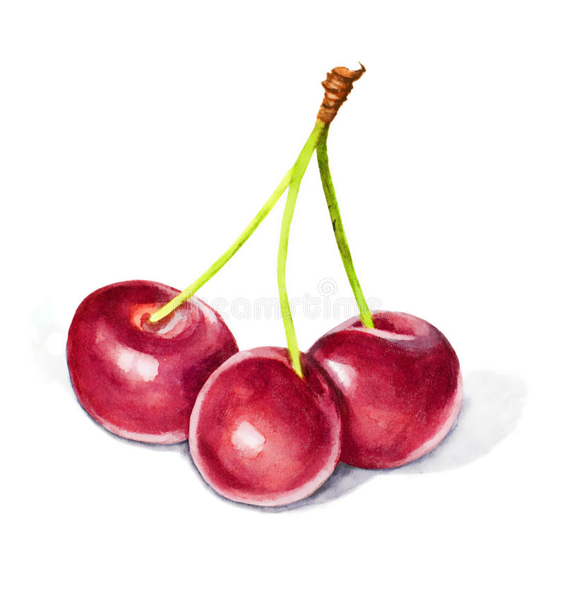 Watercolor with three cherries royalty free stock photo