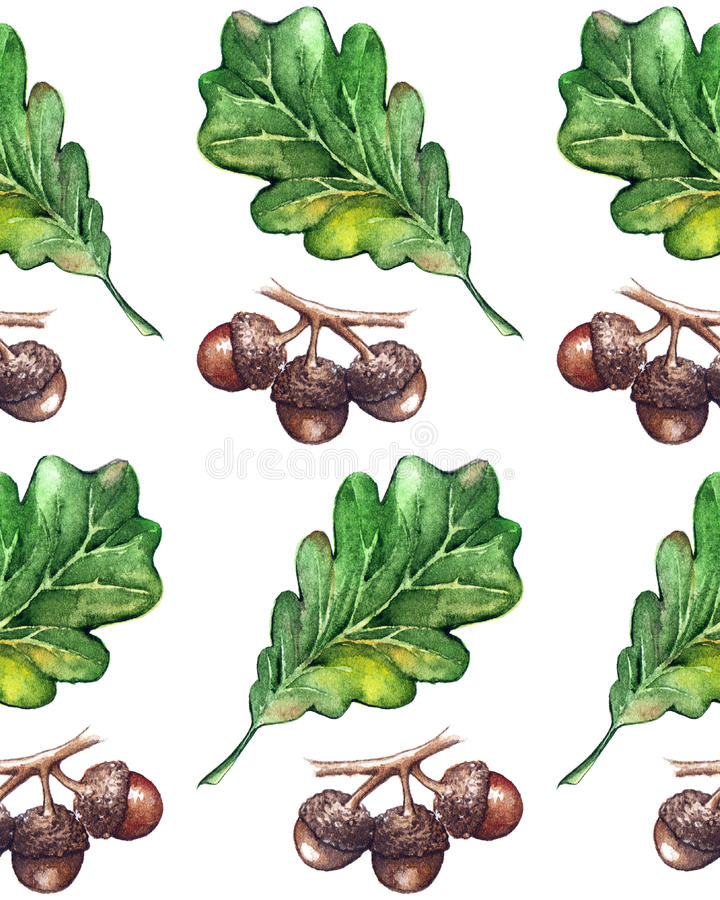 Watercolor three oak green leaf acorn seed seamless pattern background.  royalty free illustration