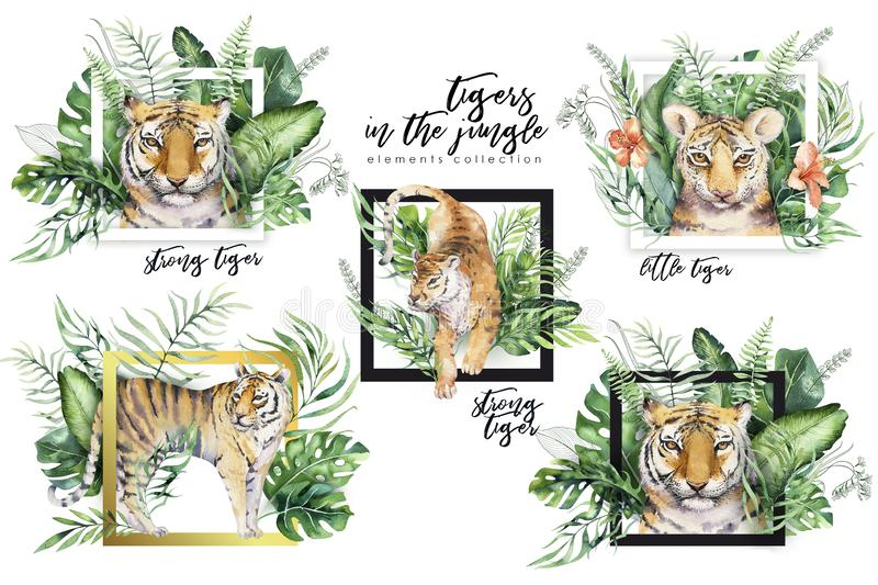 Watercolor tiger illustration and summer paradise tropical leaves jungle print with frame. Palm plant and flower. Watercolor tiger illustration and summer vector illustration