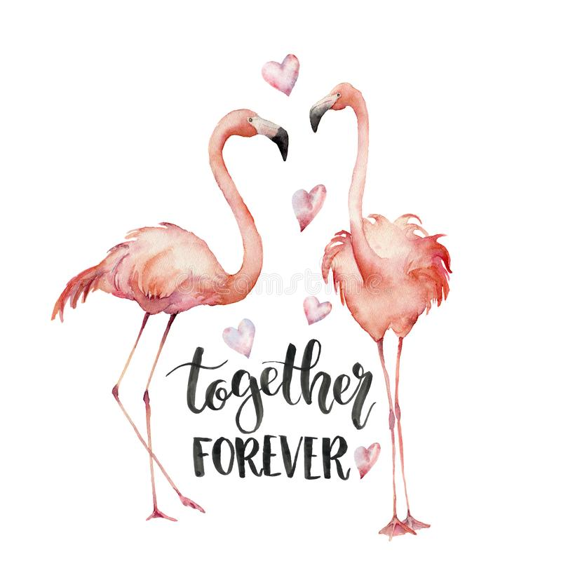 Watercolor Together forever card. Hand painted Flamingo couple with hearts and lettering isolated on white background. Holiday illustration for design, print stock illustration