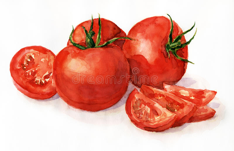 Watercolor tomatoes. Watercolor painting, still life, tomatoes on a light background royalty free illustration