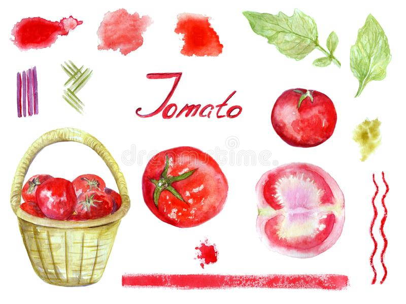 Watercolor tomatoes hand drawn aquarelle set including tomato in a wicker basket,cut tomato,leaves, lettering,colorful stains and stock illustration