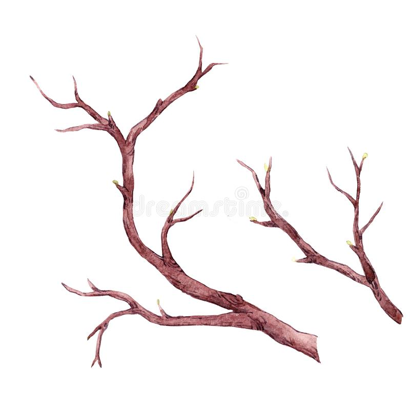 Watercolor tree branch composition stock illustration
