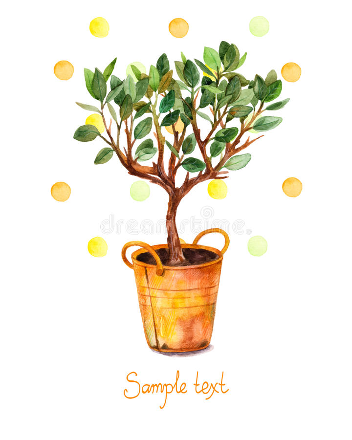 Watercolor tree in pot with watercolor splashes. Vector illustration. Spring time. vector illustration