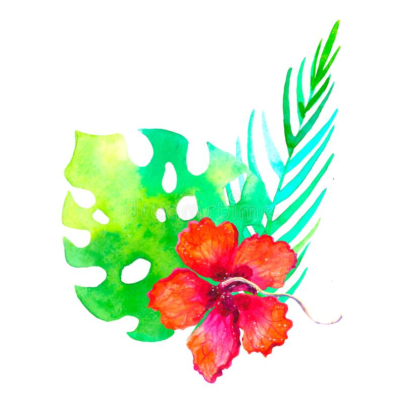 Watercolor tropical bouquet traditional drawing. Painting aquarelle exotic flower isolated on white background vector illustration