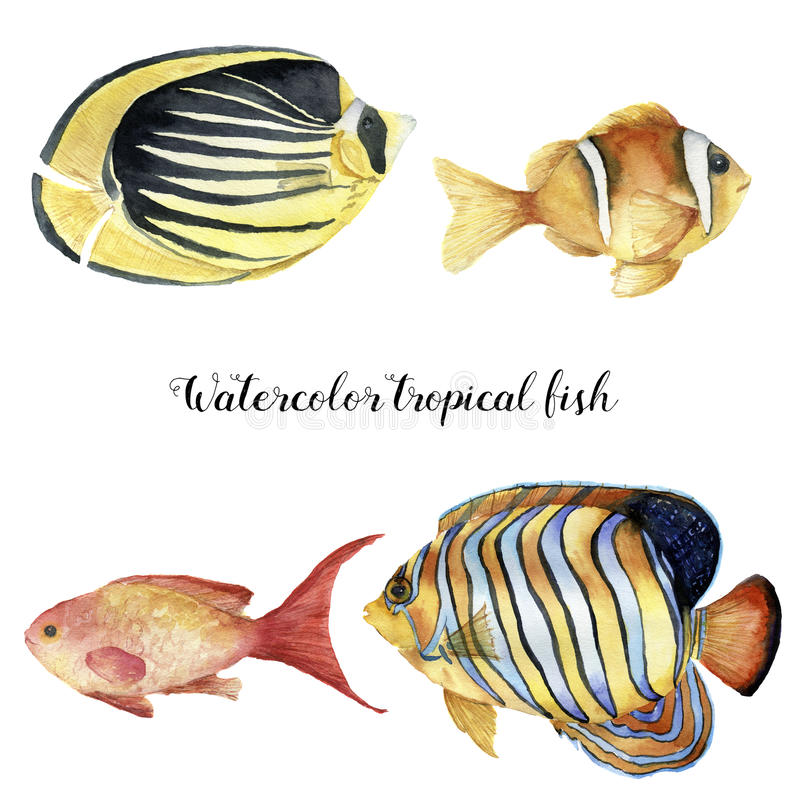 Watercolor tropical fish set. Hand painted Royal angelfish, Butterflyfish, Sea goldie and Clownfish isolated on white royalty free illustration