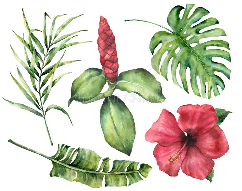 Watercolor tropical flowers and leaves. Hand painted monstera, coconut and banana palm branch, hibiscus, alpinia stock illustration