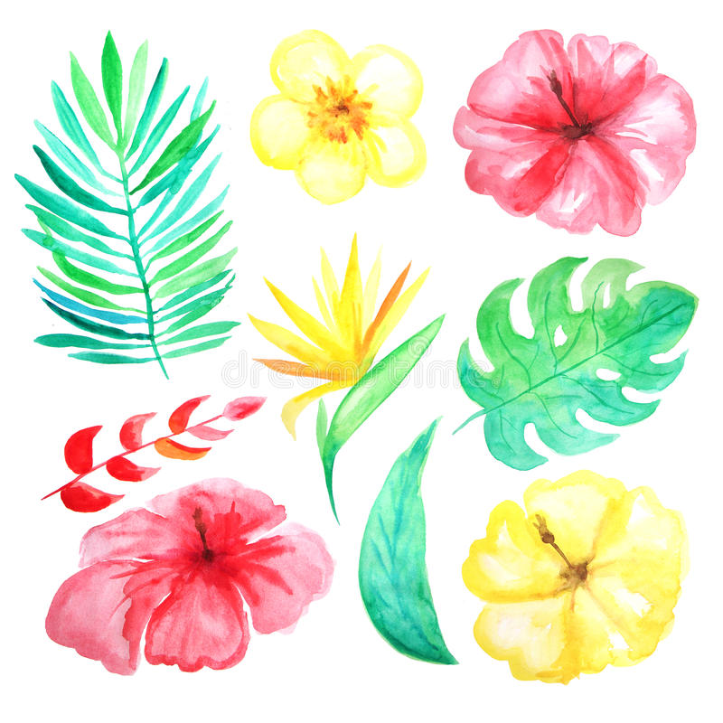watercolor tropical flowers leaves and plants stock illustration rh dreamstime com Tropical Leaves Clip Art tropical flower clipart vector
