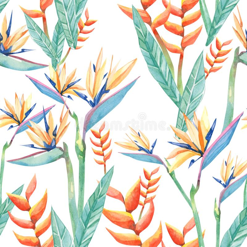 Watercolor tropical flowers sterilizes und branches . Seamless pattern tropical plant royalty free illustration