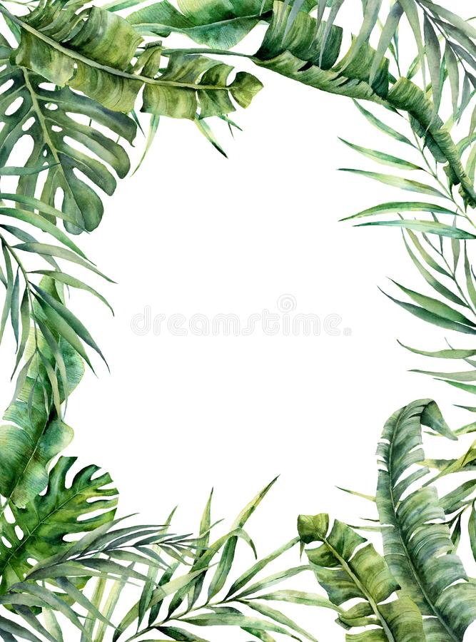 Watercolor tropical frame with exotic leaves. Hand painted floral illustration with banana, coconut and monstera branch stock photography