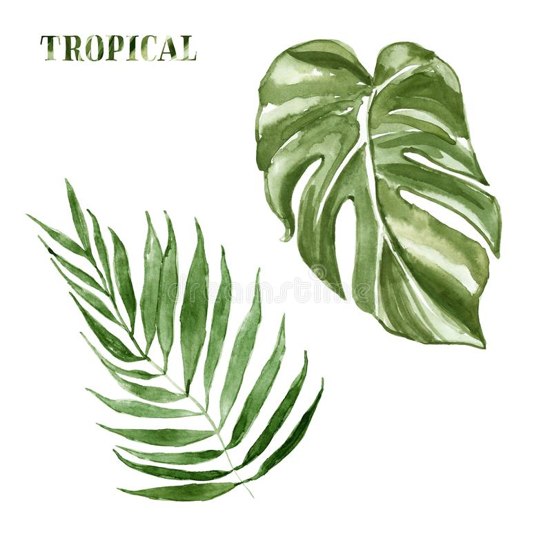 Watercolor tropical leaves set, isolated on white background. Hand painted summer botanical illustration of exotic green plants. Monstera, banana palm. For stock illustration