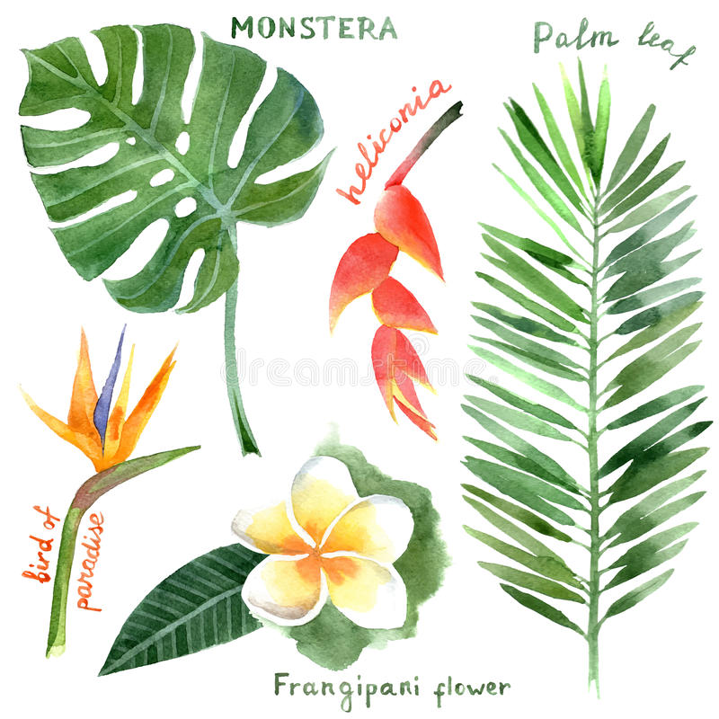 Watercolor tropical plants stock illustration