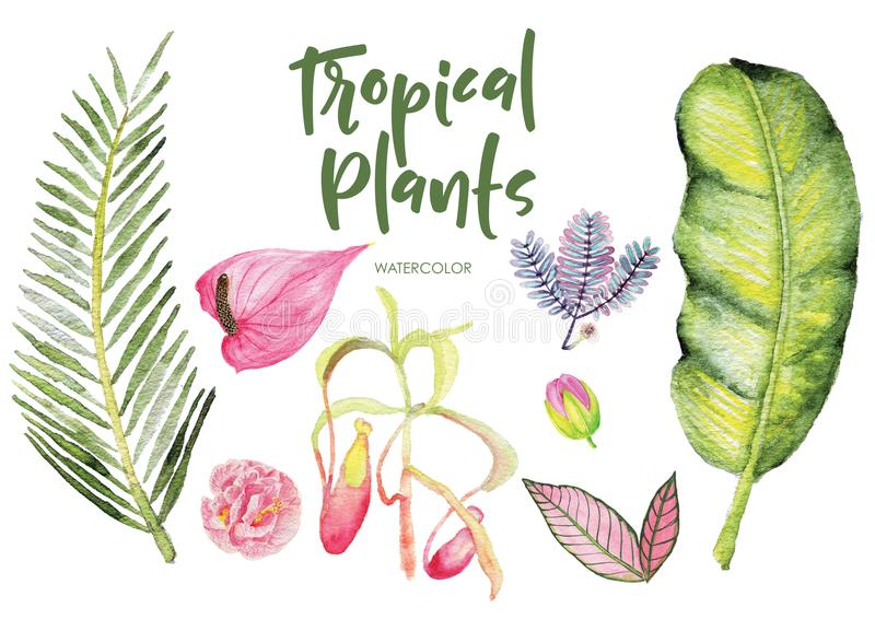 Download Watercolor Tropical Plants Isolated Clipart On White Background. Stock Illustration - Illustration of illustration, plants: 115776332