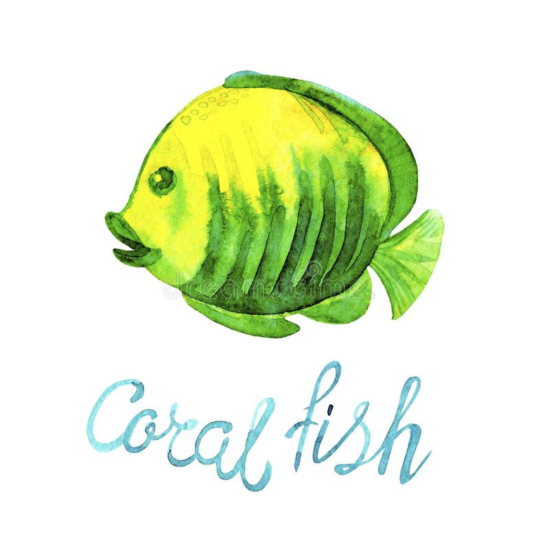 Watercolor tropical Sea Fish of coral reefs  yellow green color and lettering Coral fish isolated on white background. royalty free illustration