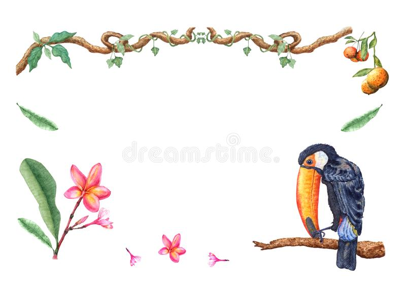 Watercolor tropical toucan on a branch, tangerine fruits, frangipani flowers, lianas, isolated on white background. stock illustration