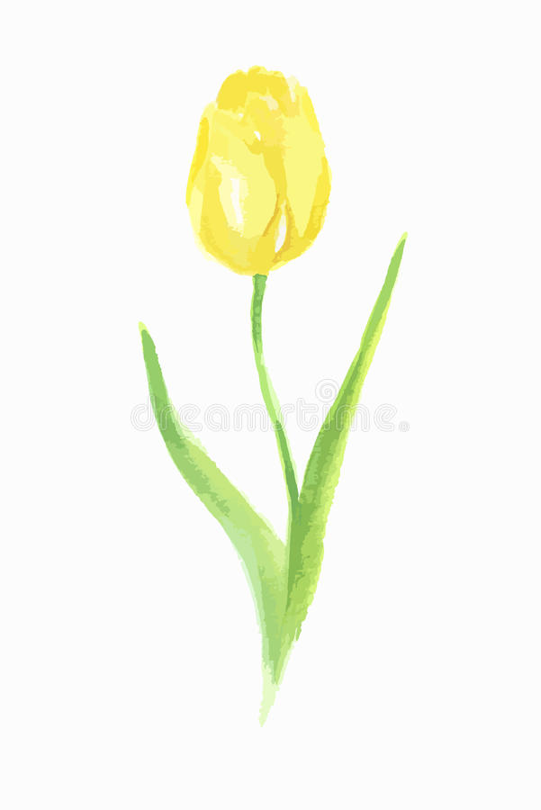 Watercolor tulip. Watercolor tulip on white background. Beautiful and elegant flower for decoration vector illustration