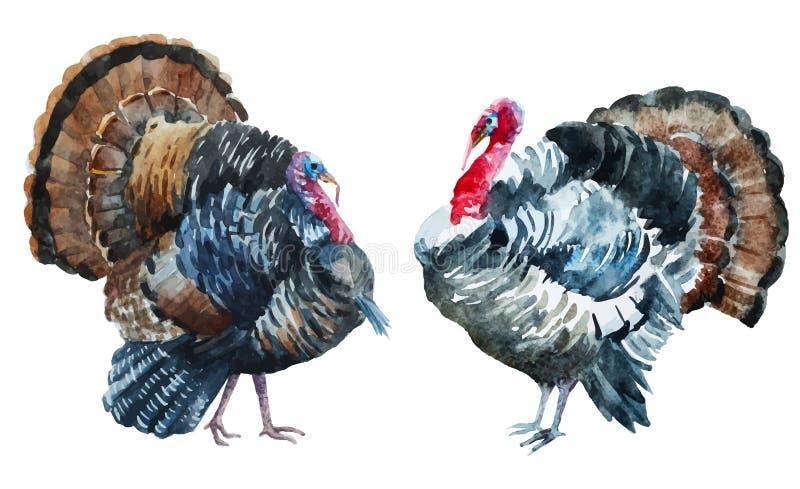 Watercolor turkey vector illustration