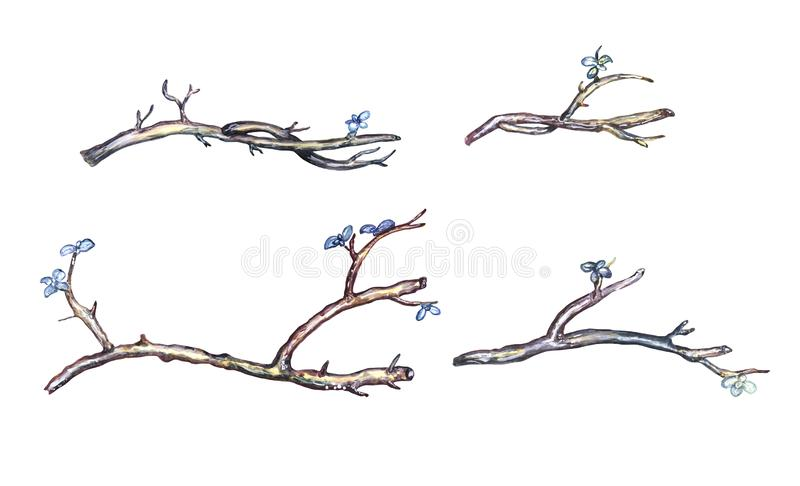 Watercolor twig set. Set of twigs with flowers.  Isolated clipart. Watercolor, mixed media stock image