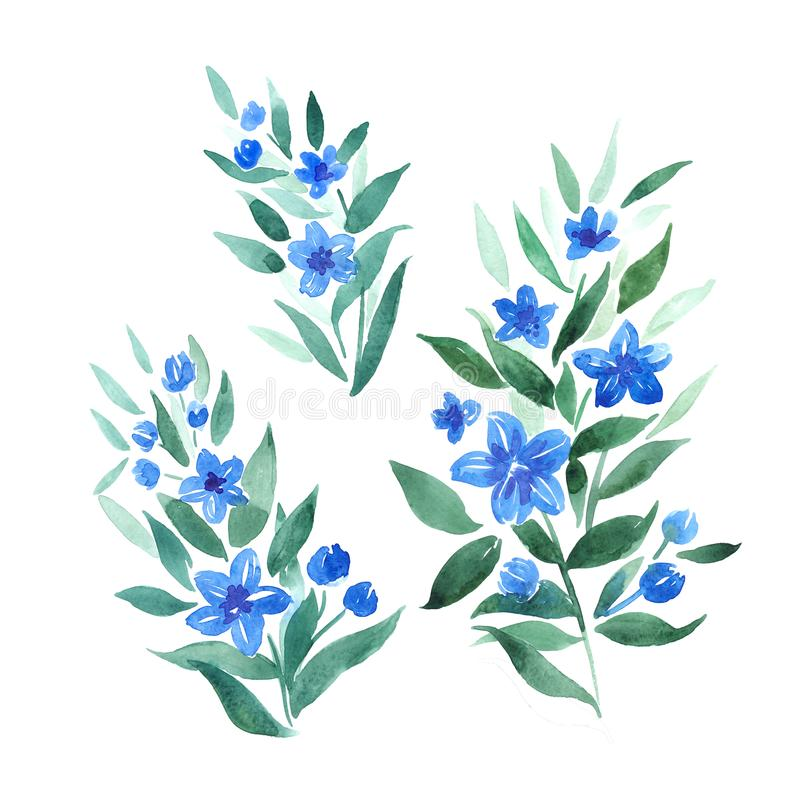 Watercolor twigs with blue flowers. Decorative botanical elements for design royalty free illustration