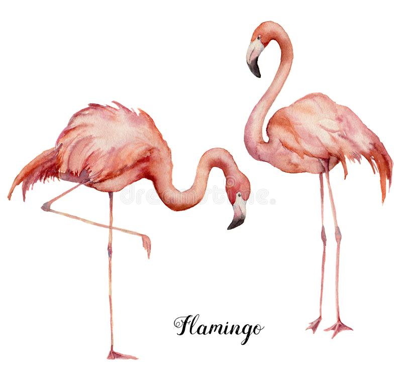 Watercolor two pink flamingo set. Hand painted bright exotic birds isolated on white background. Wild life illustration vector illustration