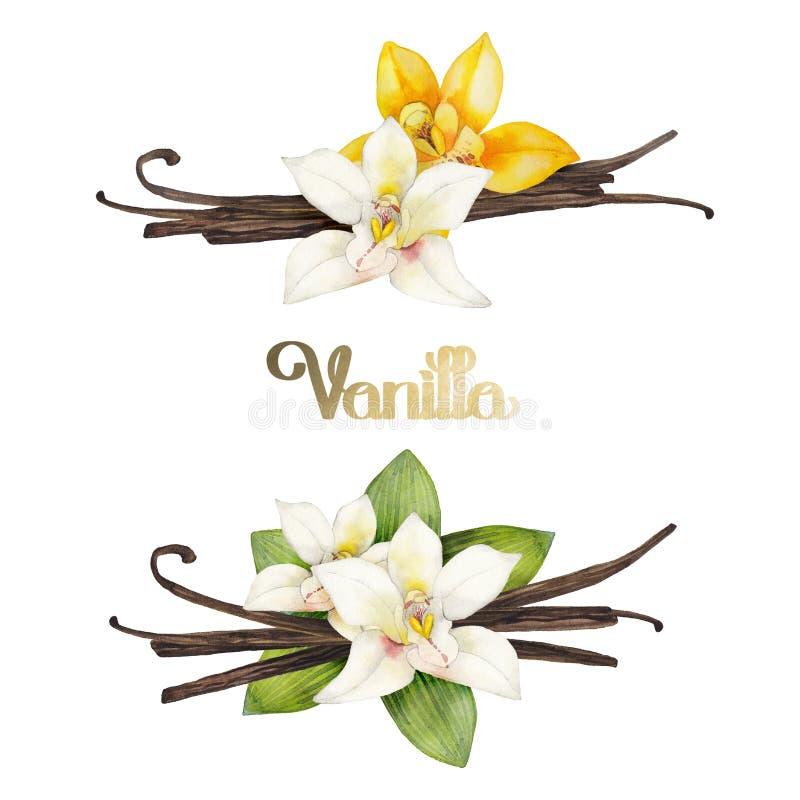 Watercolor vanilla vignettes vector illustration