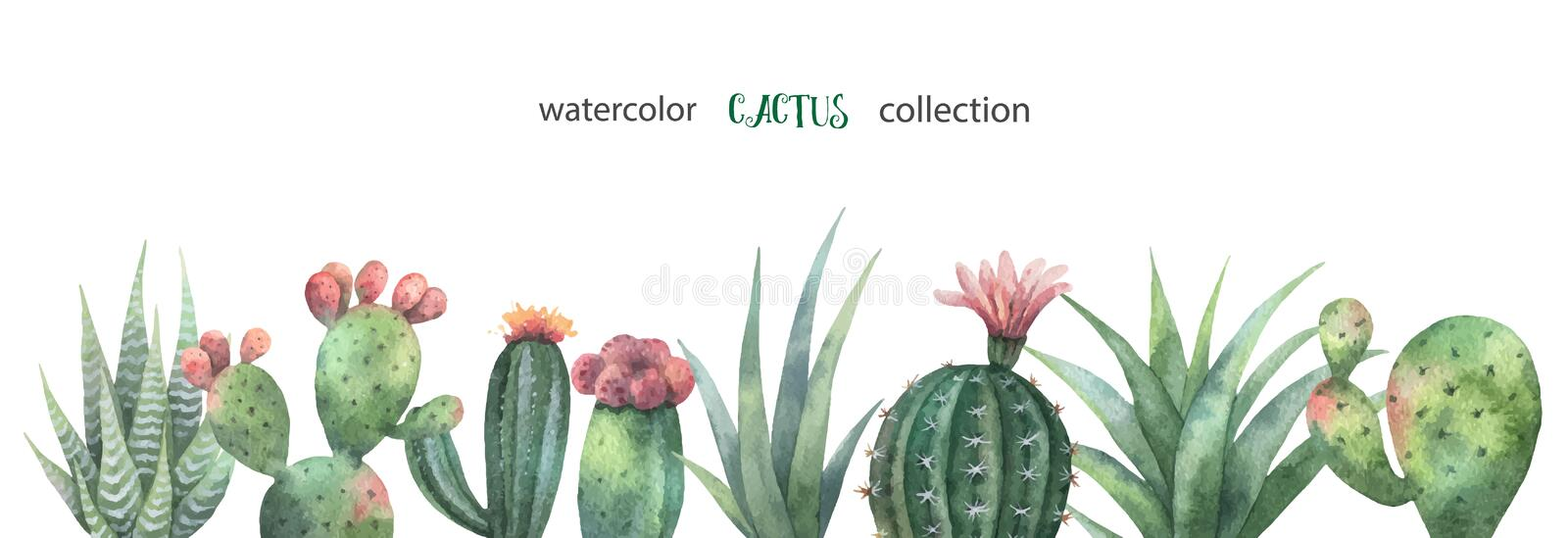 Watercolor vector banner of cacti and succulent plants isolated on white background. Flower illustration for your projects, greeting cards and invitations vector illustration
