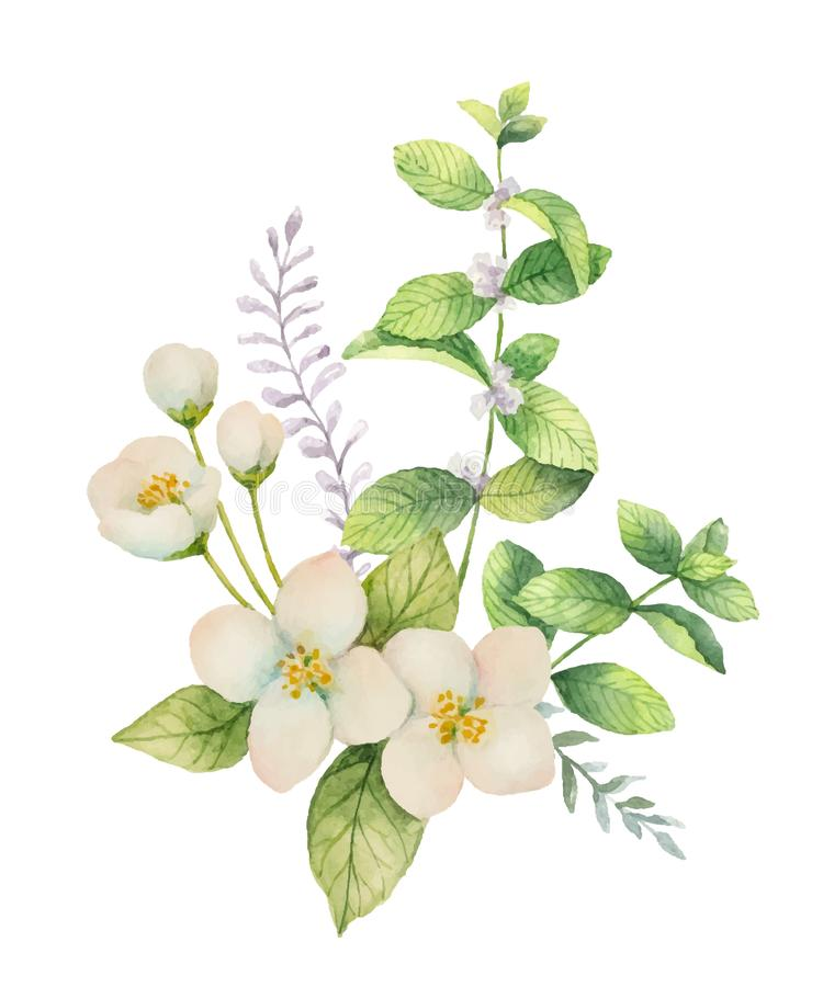 Watercolor Vector Bouquet Of Jasmine And Mint Branches Isolated On ...