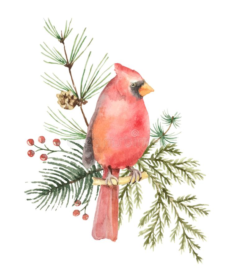 Watercolor vector Christmas bouquet with Bird Cardinal and fir branches. Illustration for greeting cards and invitations isolated on white background vector illustration