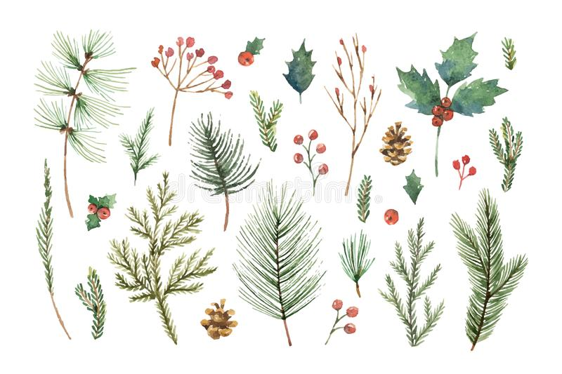 Watercolor vector Christmas set with evergreen coniferous tree branches, berries and leaves. stock illustration