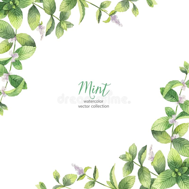 Watercolor vector frame of mint branches isolated on white background. royalty free illustration