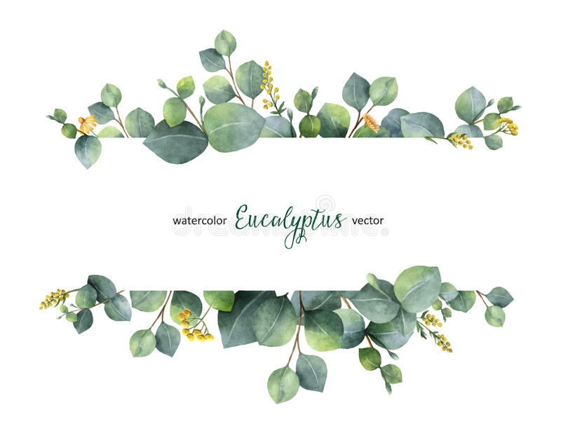 Watercolor vector green floral banner with silver dollar eucalyptus leaves and branches isolated on white background. royalty free illustration